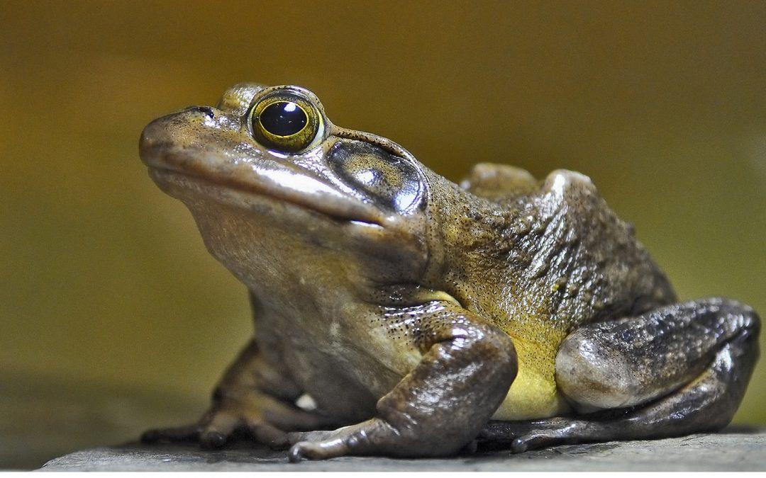 Ces espèces oubliées : les amphibiens et reptiles de la Haute-Côte-Nord