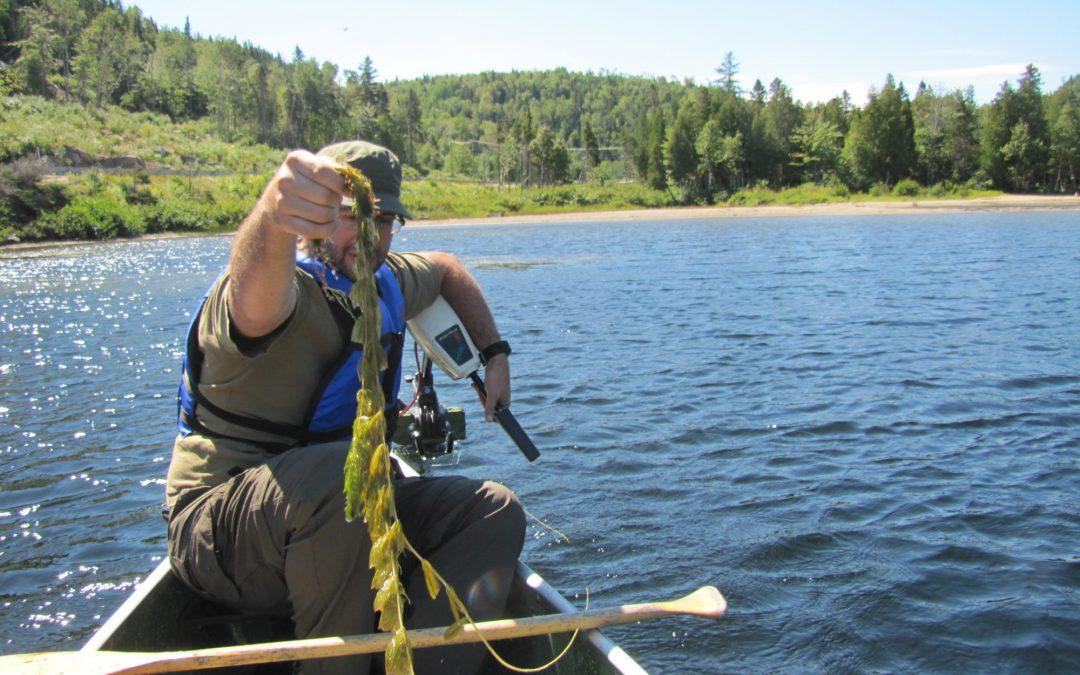 Informations sur le myriophylle à épis lors de la traversée du lac Gobeil