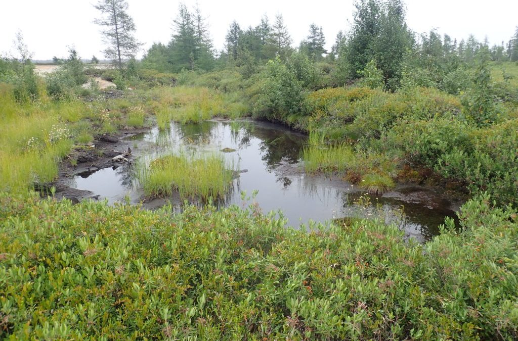 Connaissez-vous les milieux humides ?