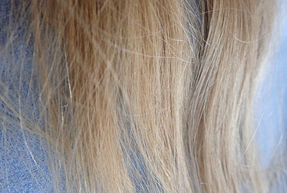 Les cheveux – campagne « Flushe » pas tes ordures